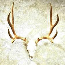 how to mount deer antlers mounted mule antler the taxidermy horn mounts mounting kits canada keystone light deer antler mount