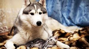 Hd Wallpapers For Desktop Cute Animals