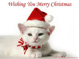 Image result for cat pictures for christmas