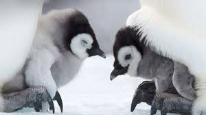 cute penguins. Unique Penguins 8 Baby Penguins That Are Pretty Cute But Donu0027t Stand A Chance Against  Hillary Clinton In 2016 To N