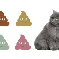 Kitten Diarrhea Color Chart Is My Cats Poop Normal Cat Poop Chart With Pictures
