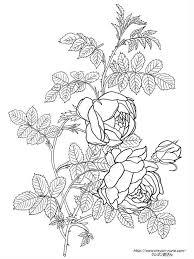 ルドゥーテの黄色の薔薇の植物画の塗り絵の下絵画像 шаблоны