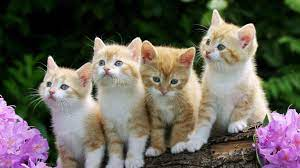 Cat Desktop Wallpapers - Top Free Cat ...