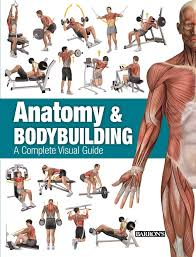 Bodybuilding Exercises Chart Free Download Pdf Anatomy Bodybuilding A Complete Visual Guide Ricardo