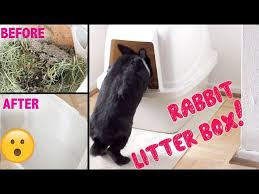 to clean and set up a rabbit litter box