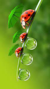 Ladybug wallpaper, Animal wallpaper