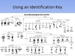 Macroinvertebrate Identify Keys Www Imghulk Com