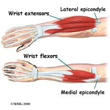 The function of these tendons is to extend the. Treating Tendonitis For Rock Climbers Park Sports Physical Therapy