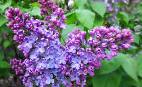 diffe types of flowers with name typesofflower diffe types of flowers with name typesofflower gardening