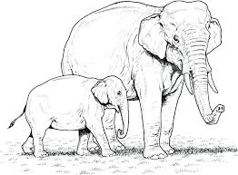 Coloring Pages Printable Elephant Coloring Pages For Elephants