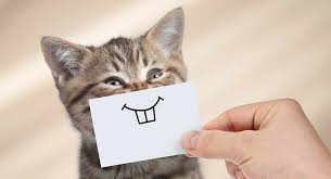 Image result for smiling cat