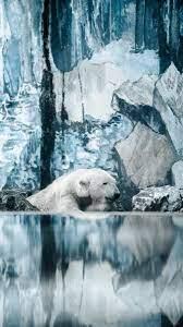 Download wallpaper 1350x2400 polar bear ...