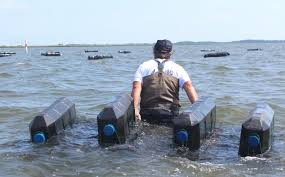 Shellfish Farming Begins In The Rehoboth Bay Cape Gazette