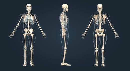 3d iskelet modeli