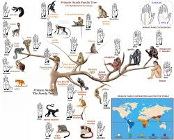 Human Family Tree Chart The Primate Hands Family Tree Primatology Palm Reading
