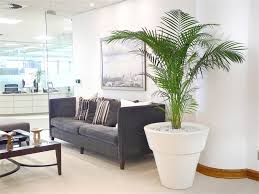 modern office plants. Nice Modern Office Plants Dubai Modern Office Plants Home Design Inspiration