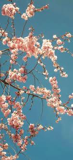 Flower Wallpaper Iphone Xs Max