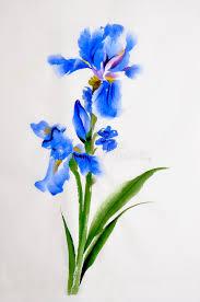 iris flower watercolor painting stock ilration ilration of freshness nature 49256839