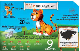 Animal Chart For Kids Tiger Poster Size A3 11 7 X 16 5