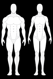 Human Body Front And Back Outline Clipart Library Clip