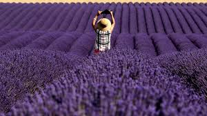 Soothing Scent Designs Lavenders Soothing Scent Could Be More Than Just Folk