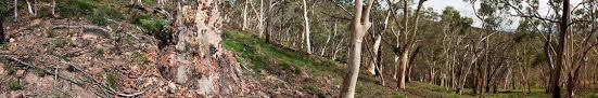black mountain nature reserve