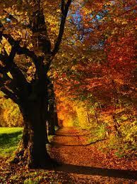 Fall Forest Wallpaper - iPhone, Android ...