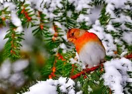 winter animal nature backgrounds. Beautiful Nature Winter  Bird To Animal Nature Backgrounds