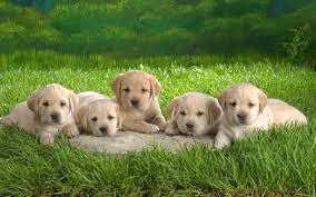 baby animals wallpapers. Contemporary Animals Download Inside Baby Animals Wallpapers