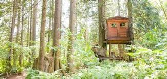 Treehouse masters treehouse point Burl Treehouse There Are Six Treehouses At Treehouse Point Most Of Which Are Designed For Two Person Occupancy With The Exception Of Burl Treehouses Do Not Have Modern Red Box Pictures Treehouse Point Nature Hideaway Near Seattle Washington