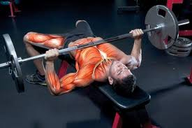 How To Increase Bench Press Weight A 5Step Guide And Training Strength Training Bench Press
