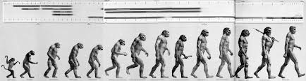 Evolution Of Man Chart What Our Most Famous Evolutionary Cartoon Gets Wrong The