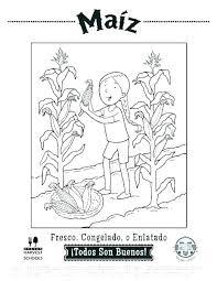 Botany Worksheets