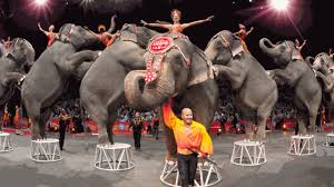 ringling bros and barnum bailey circus history from 1841 to 2017 newsday