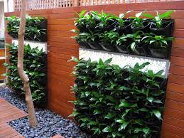 vertical gardens and roof gardens