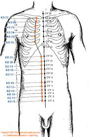 Kd Kidney Meridian Graphic Chinese Medicine Theory