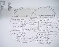 venn diagram for mitosis and meiosis meiosis diagram worksheet mitosis and meiosis venn diagram