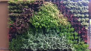 how to grow a vertical garden tips for