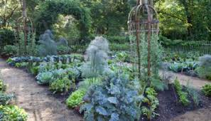 Secrets To A Thriving Fall Vegetable Garden In WNC  Town And Fall Garden Crops