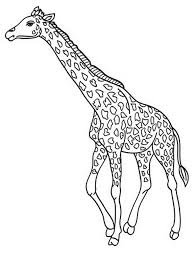 Giraffe Coloring Pages Printable Throughout Egconference Org 8