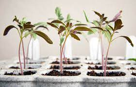 how to start seeds indoors garden gate