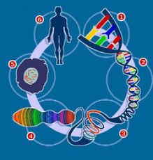 Los 100 más grandes descubrimientos científicos de la Historia. | Human  genome, Human body systems, Science unit studies