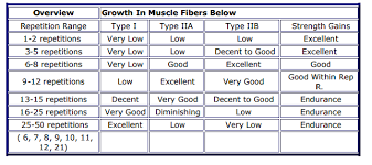 Muscle Gain Workout Chart Fast Muscle Building Proven Methods For Amazing Gains Celekt