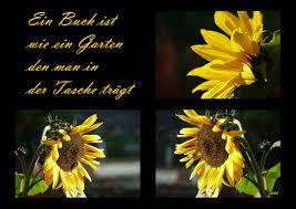 Sonnenblume Foto Bild Pflanzen Pilze Flechten Blüten