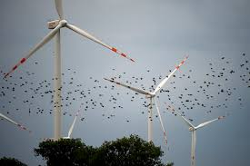 Image result for wind farms kill birds pictures