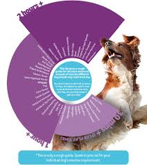 Bond And Co Dog Size Chart How Much Exercise Does Your Dog Need Pdsa