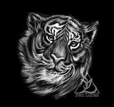 Tiger Sketch On Behance