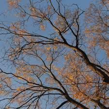 aesthetic, autumn, leaves, fall foliage ...