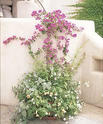 Creeper Plants  GreenTV  20000 Videos On Gardening In IndiaWall Climbing Plants India