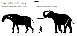 animal sizes chart file largest land mammals size chart jpg wikimedia commons